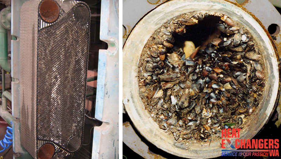 Biological Fouling - Is Your Fouled Heat Exchanger Costing You?